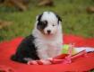 Bazinga 4 Wochen alt