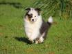 Bazinga Champa Chin 7,5 Wochen alt