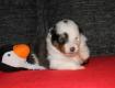 Bazinga 3 Wochen alt