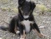 Baby-Leo (7-8 Wochen alt)
