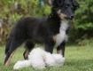 Baby-Leo ca. 11-12 Wochen alt