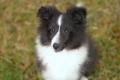 Lynn, 16,5 Wochen alt