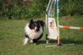Agility Lynn 1,5 Jahre alt