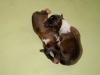 Pups born 17.07.2015