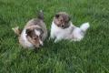 happy puppys