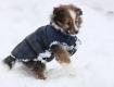 Tinybaby im Schnee verschwunden