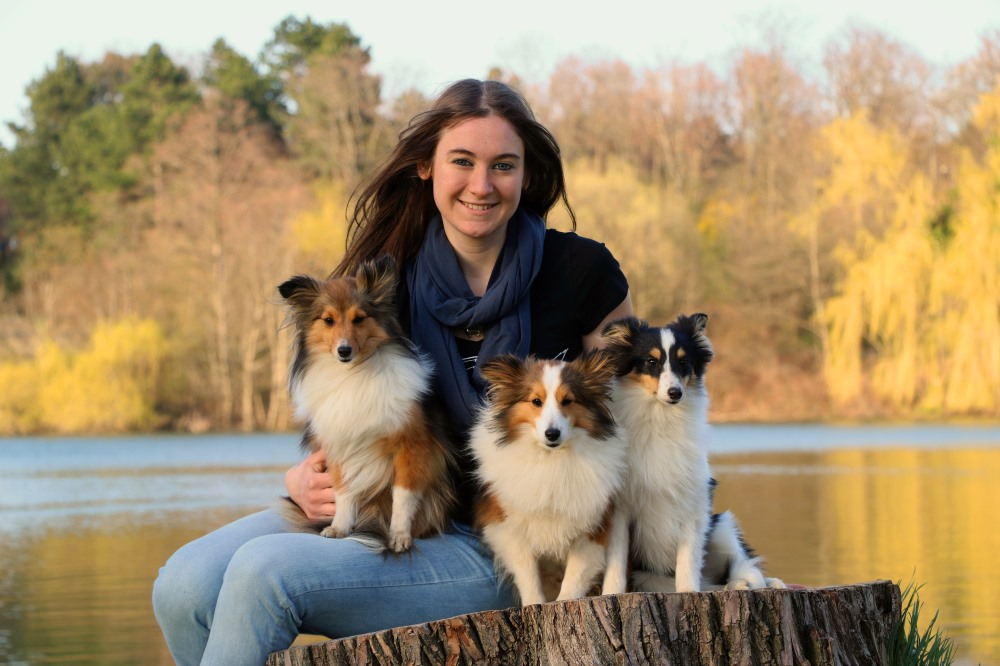 Shelties Champa Chin